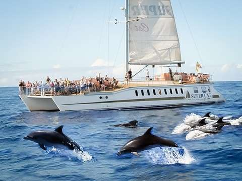 Whales and Dolphins with the Supercat Catamaran