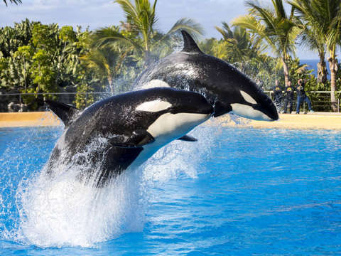 Full Day to Loro Parque - from Gran Canaria