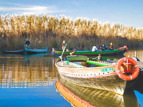 Albufera Natural Park + Boat Trip + Local Typical Food
