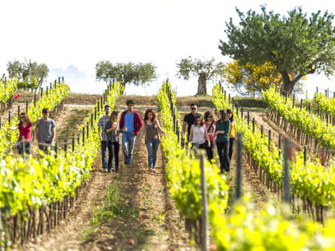 Penedès: Hiking + Wine + Multilingual Guide