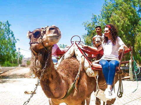 Almería: Camel Ride and Visit to the Farm
